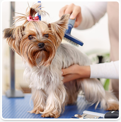 Vero Beach pet grooming services