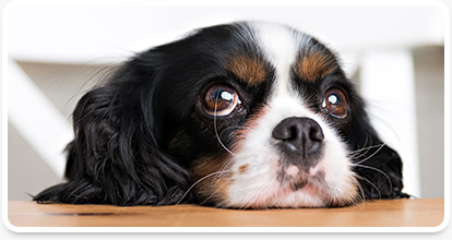 vero beach veterinary opthalmological services