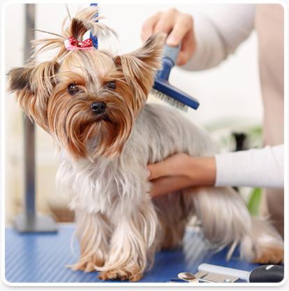 Vero Beach pet grooming services
