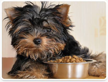 Vero Beach pet nutritional counseling