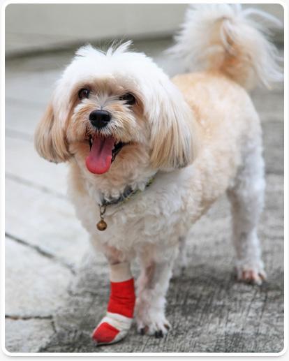 Vero Beach pet surgeries