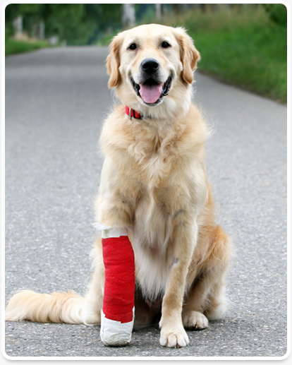 vero beach pet orthopedics
